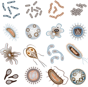 Bacteria virus and germs epidemic bacillus cells icons isolated vector illustrationのイラスト素材 [FYI03067053]