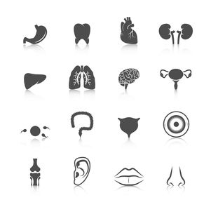Human organs black icons set of kidney heart tooth liver lung isolated vector illustrationのイラスト素材 [FYI03067150]