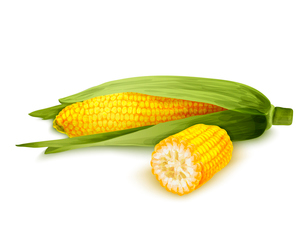 Vegetable organic food realistic yellow corn stalk isolated on white background vector illustrationのイラスト素材 [FYI03069828]