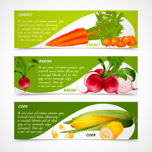 Vegetable organic food realistic carrot radish and corn horizontal banners set isolated vector illusのイラスト素材 [FYI03069845]
