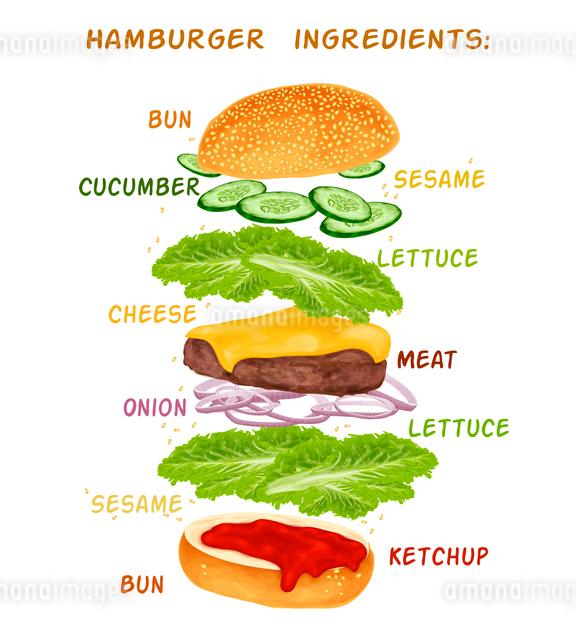Hamburger sandwich ingredients set of bun cucumber meat ketchup vector illustrationのイラスト素材 [FYI03070150]