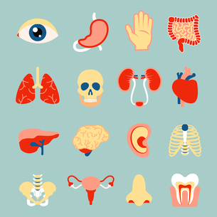 Human organs set of eye tooth lungs brain isolated vector illustrationのイラスト素材 [FYI03070452]