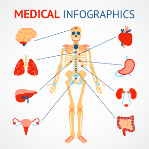 Medical infographic set of human skeleton and internal organs vector illustrationのイラスト素材 [FYI03070465]