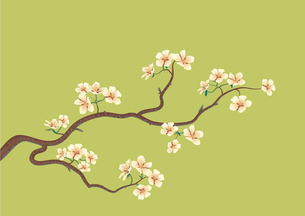 This is the vector illustration of a flowered sakura, japanese cherry treeのイラスト素材 [FYI03071650]