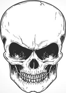 Vector illustration of detailed human skullのイラスト素材 [FYI03072545]