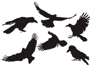 Vector illustration collection of crow silhouette in different flight positionsのイラスト素材 [FYI03072548]