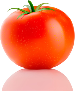Vector illustration of a fresh ripe red truss tomato isolated on whiteのイラスト素材 [FYI03072802]