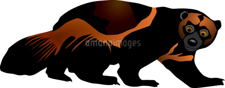 Vector illustration of wolverineのイラスト素材 [FYI03073160]