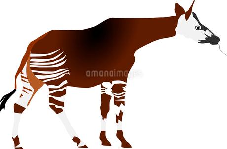 vectors okapiのイラスト素材 [FYI03073161]