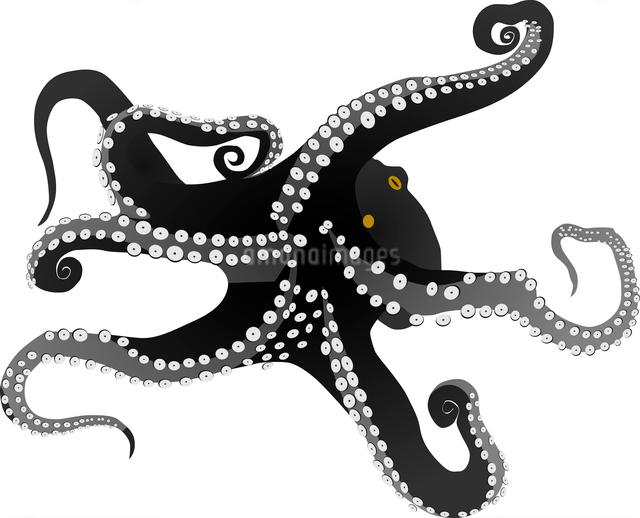 vector octopusのイラスト素材 [FYI03073164]