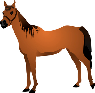vector image of a horseのイラスト素材 [FYI03073178]