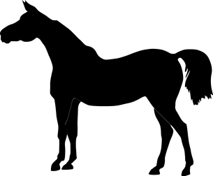 Vector illustration of a horseのイラスト素材 [FYI03073188]