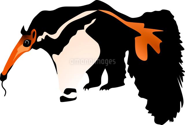 Vector illustration of anteaterのイラスト素材 [FYI03073193]