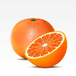 Two grapefruits on a white backgroundのイラスト素材 [FYI03074709]