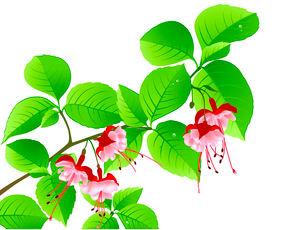 green flowering branch of tropical tree on a white backgroundのイラスト素材 [FYI03078866]