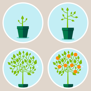 Vector growth concept - infographic in flat style - abstract process of growing green tree with coinのイラスト素材 [FYI03084552]