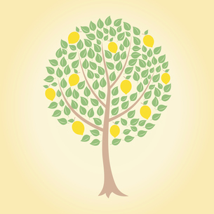 Lemon tree. Tree and yellow lemons on it. A vector illustrationのイラスト素材 [FYI03086183]