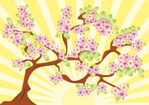 Spring card with sakura. vector illustration . blossom backgroundのイラスト素材 [FYI03087202]