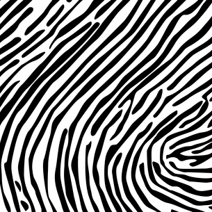 Structure from a skin of a zebra. A vector illustrationのイラスト素材 [FYI03087359]