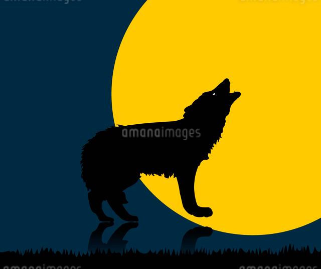 wolf. Wild animal with burning eyes in night darkness.のイラスト素材 [FYI03087780]