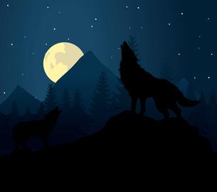 wolf3. Wild animal with burning eyes in night darkness. Vector illustrationのイラスト素材 [FYI03087783]