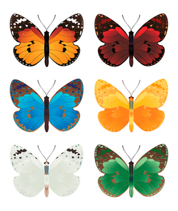 butterfly. The beautiful butterflies of six different colours.のイラスト素材 [FYI03088554]