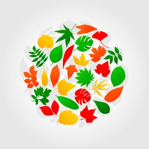Circle of leafs. Autumn leafs in the form of a circle. A vector illustrationのイラスト素材 [FYI03088676]