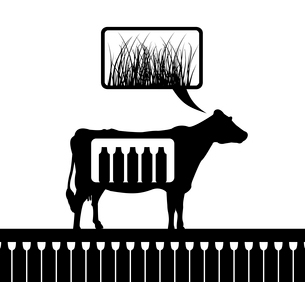 The cow thinks of a grass. A vector illustrationのイラスト素材 [FYI03088831]
