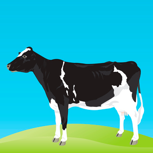Cow. The black-and-white cow costs on a meadow. A vector illustrationのイラスト素材 [FYI03088834]