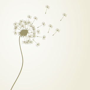 Dandelion. From a dandelion flower seeds fly away. A vector illustrationのイラスト素材 [FYI03088857]