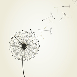 From a dandelion seeds fly. A vector illustrationのイラスト素材 [FYI03088867]