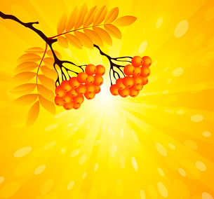 Vector illustration Rowan branch in sunny backgroundのイラスト素材 [FYI03089610]