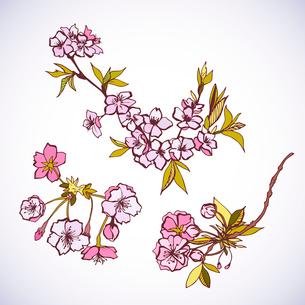 Blossoming sakura decorative elements isolated vector illustrationのイラスト素材 [FYI03091061]