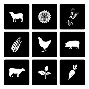 Rural icons set of cow chicken pig corn and wheat vector illustrationのイラスト素材 [FYI03091064]