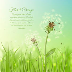 Floral design poster of dandelion with pollens on green grass background vector illustrationのイラスト素材 [FYI03091647]