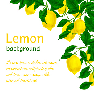 Natural organic ripe juicy lemon tree branch background poster frame template vector illustrationのイラスト素材 [FYI03091733]
