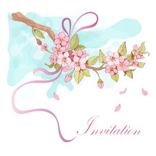 Sakura cherry invitation card template with pink petals and ribbon decorative vector illustrationのイラスト素材 [FYI03091826]