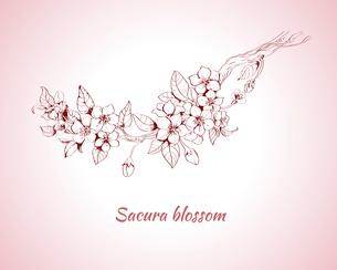 Sakura blossom decorative print on pink background sketch vector illustrationのイラスト素材 [FYI03091827]