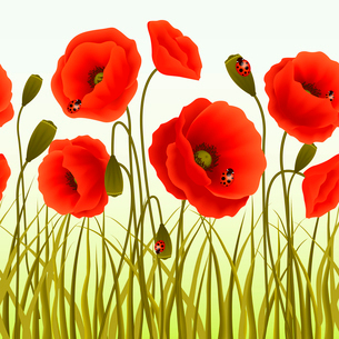 Red romantic poppy flowers and grass with ladybugs wallpaper vector illustration.のイラスト素材 [FYI03091921]