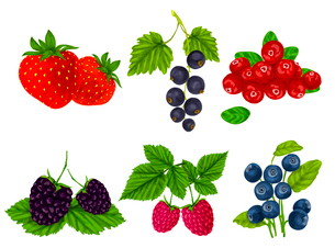Natural organic berries set of strawberry blackberry cranberry isolated vector illustrationのイラスト素材 [FYI03091994]