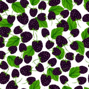 Natural fresh organic garden blackberry seamless pattern vector illustrationのイラスト素材 [FYI03092013]