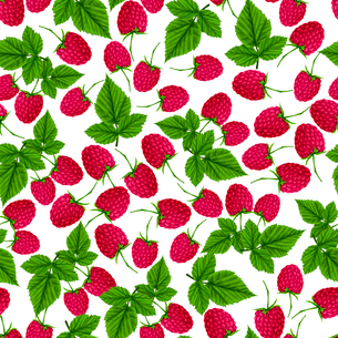 Natural fresh organic garden and forest raspberry seamless pattern vector illustrationのイラスト素材 [FYI03092017]