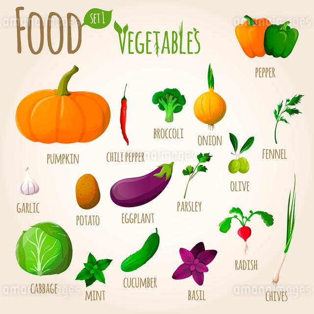 Food vegetables doodle set of pepper pumpkin broccoli onion fennel garlic vector illustrationのイラスト素材 [FYI03092030]