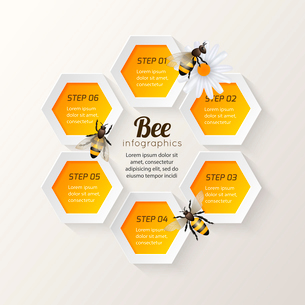 Honey bee on daisy and comb background hexagon steps infographic vector illustrationのイラスト素材 [FYI03092236]