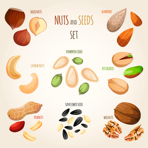 Nuts and seeds mix decorative elements set vector illustrationのイラスト素材 [FYI03092314]