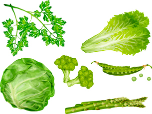 Green vegetable organic food set with cabbage parsley peas lettuce isolated vector illustrationのイラスト素材 [FYI03092570]