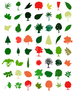 Trees and leafs. Collection of icons of trees and leaves. A vector illustrationのイラスト素材 [FYI03092807]