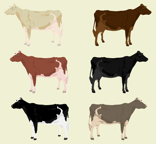 Cow3. Some cows on a farm of different colouring. A vector illustrationのイラスト素材 [FYI03092884]