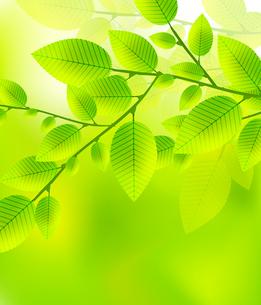 Leaves tree - blurred green vector illustration. Summer designのイラスト素材 [FYI03099965]
