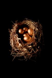 鳥の巣と金の卵の写真素材 [FYI03102332]